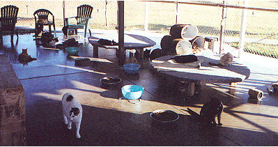 The cats' room at the shelter